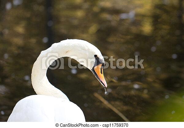 swan - csp11759370