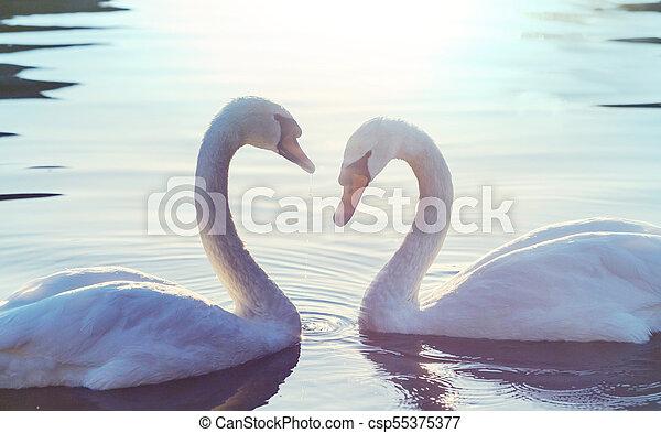 Swan - csp55375377