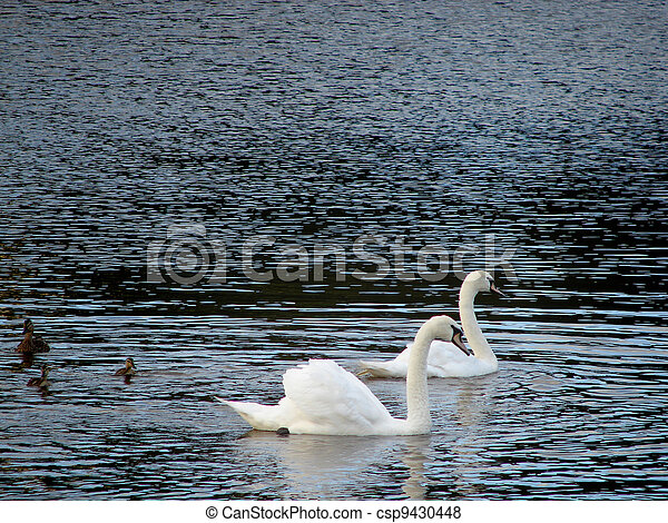 swan - csp9430448