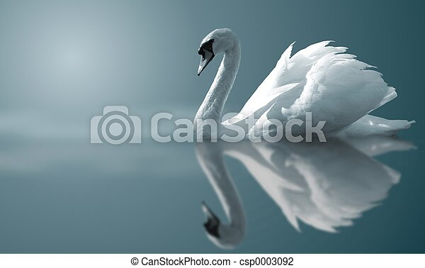 Swan Reflections - csp0003092