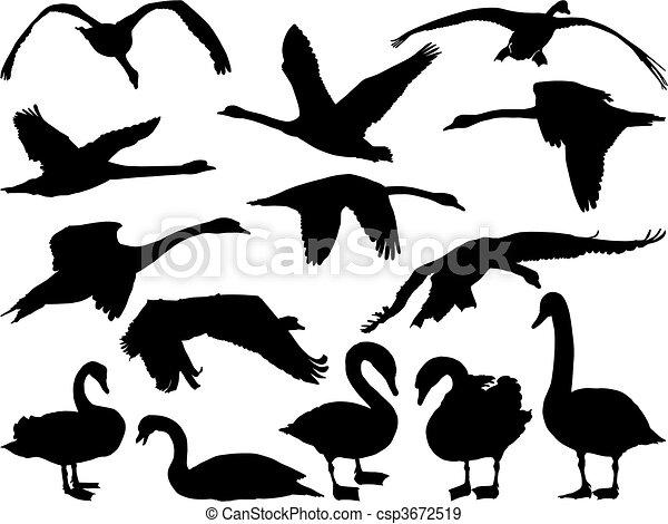 Swan Silhouette - csp3672519