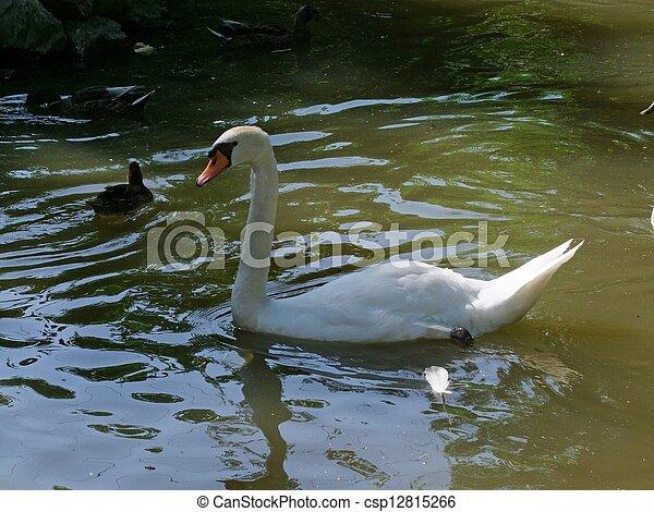 Swan - csp12815266