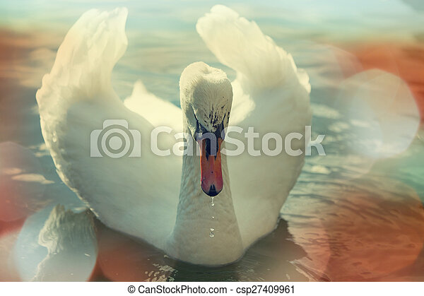 Swan - csp27409961