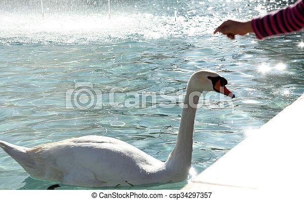swan - csp34297357