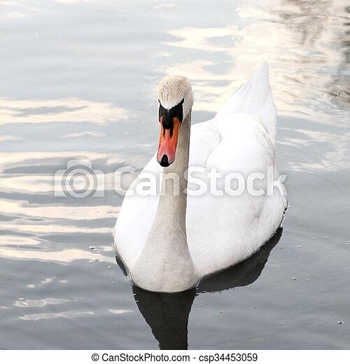 Swan - csp34453059