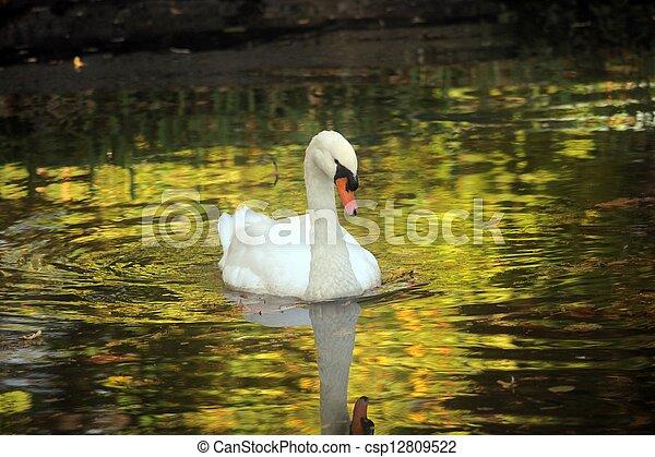 Swan - csp12809522