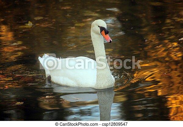 Swan - csp12809547