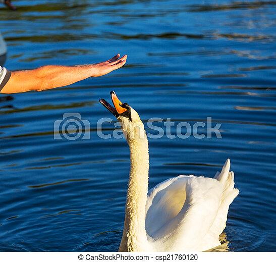 Swan - csp21760120