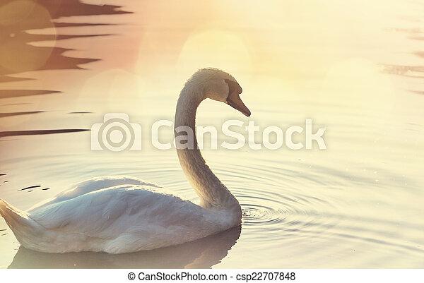Swan - csp22707848
