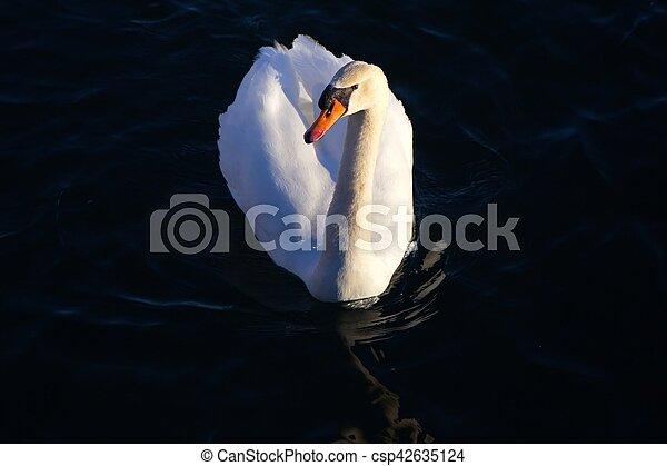 Swan - csp42635124