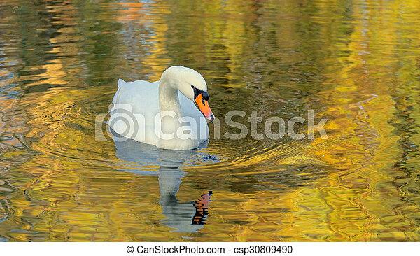 Swan - csp30809490
