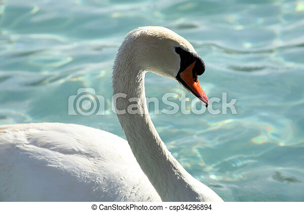 swan - csp34296894