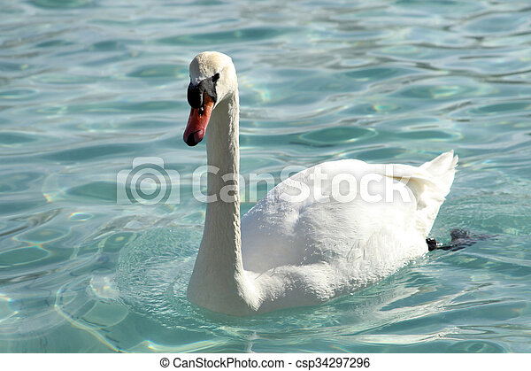 swan - csp34297296