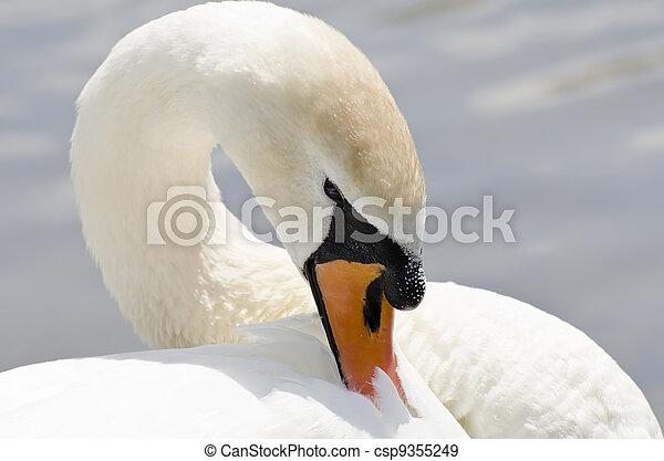 Swan - csp9355249