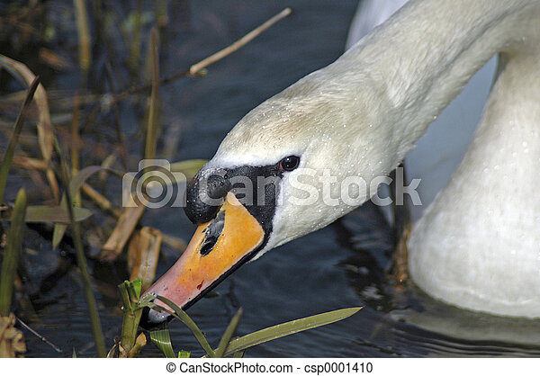 swan - csp0001410
