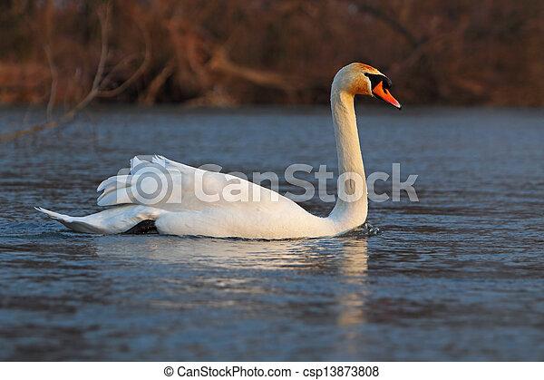 Swan - csp13873808