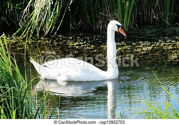 Swan - csp13922703
