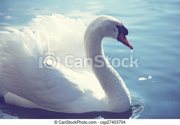 Swan - csp27403704