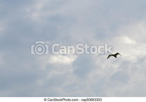 Swan - csp50663303