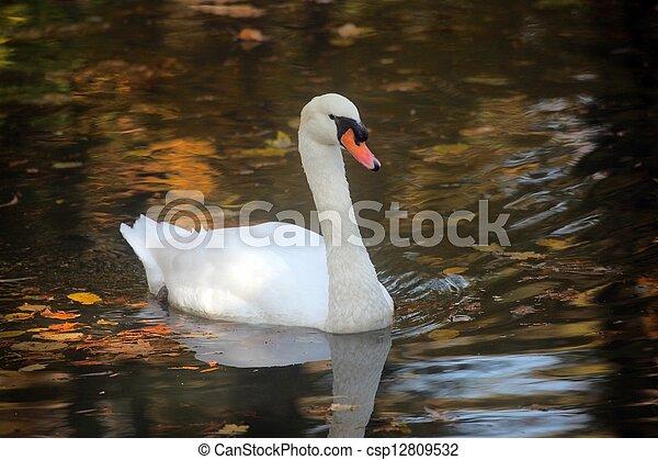 Swan - csp12809532