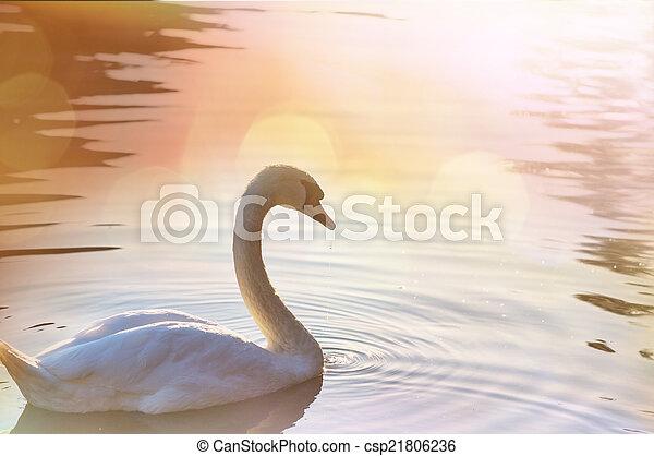 Swan - csp21806236