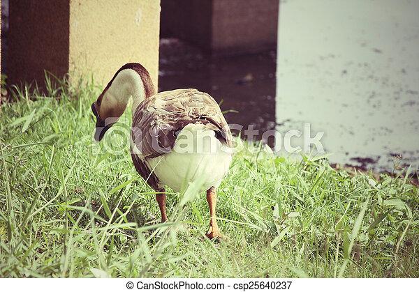 Swan - csp25640237