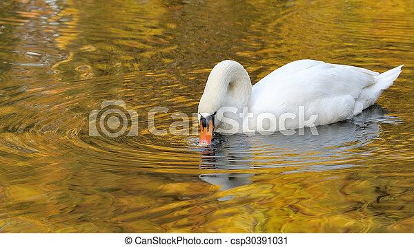 Swan - csp30391031