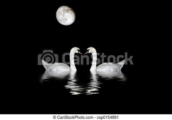 Swans By Moonlight >> Swans Bathing In Moonlight