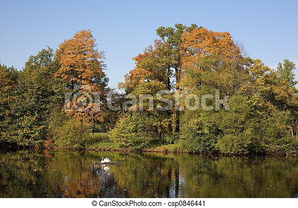 Swans in autumn park - csp0846441