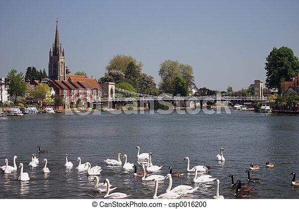 swans - csp0016200