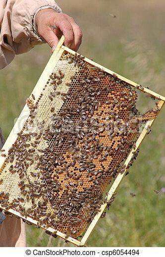 Swarm of bees - csp6054494