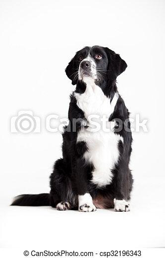 Sweet dog is waiting - csp32196343