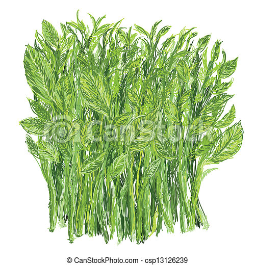 sweet leaf bush - csp13126239