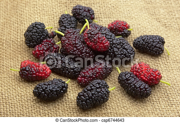Sweet mulberry - csp6744643