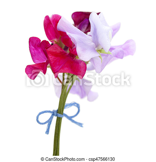 Sweet pea flowers of different colors small posy isolated on white sweet pea flowers csp47566130 mightylinksfo