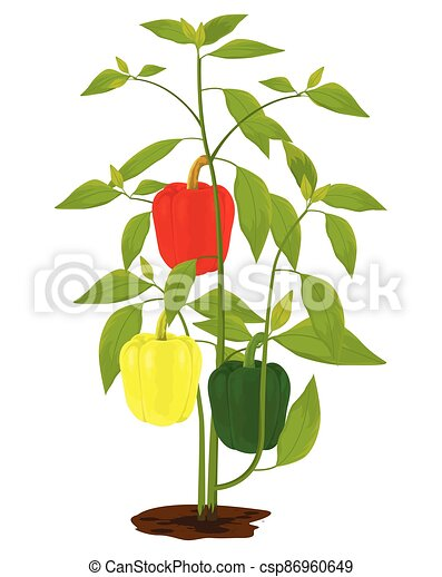 sweet pepper plant on white background vector design - csp86960649