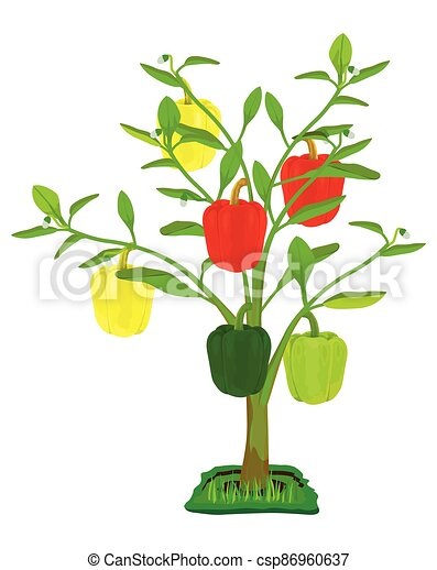 sweet pepper plant on white background vector design - csp86960637