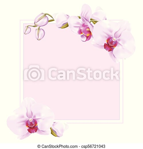 Sweet pink moth orchid frame. Frame for copy space decorated with ...