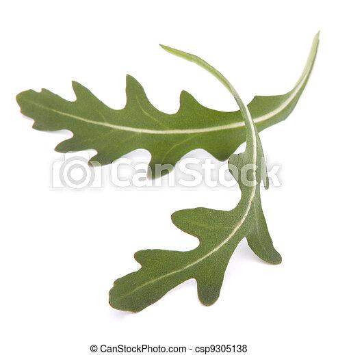Sweet rucola salad or rocket lettuce leaves  - csp9305138