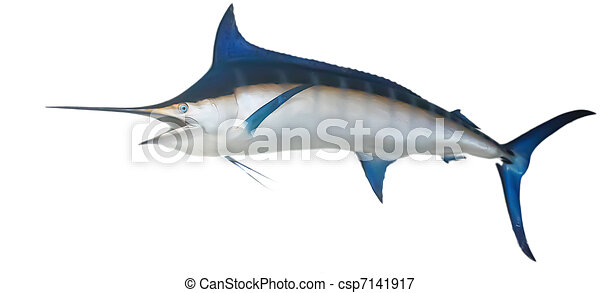 Swordfish Hanging on Wall - csp7141917