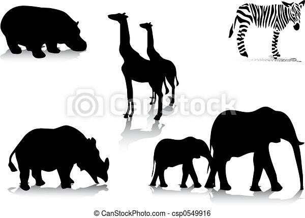 sylwetka, zwierzę, afrykanin - csp0549916
