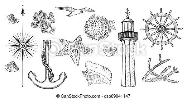 symbols., haditengerészeti, korall, fény, becsap, épület, swellfish, állhatatos, tengeri, rózsa, tenger csillag, héj, vasmacska, tengeri csillag, vezetés, kormányzó, felteker, gördít - csp69041147