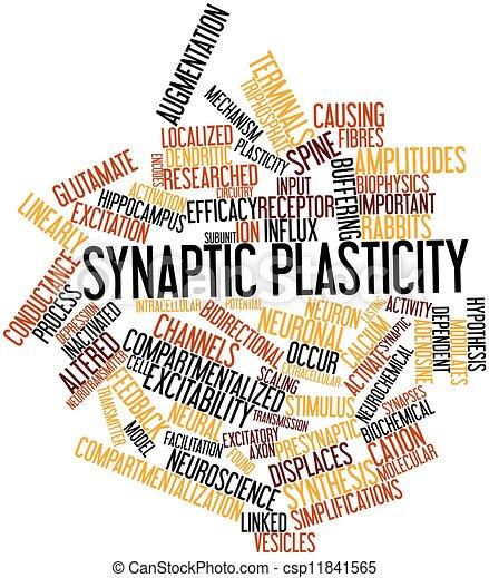 Synaptic plasticity - csp11841565