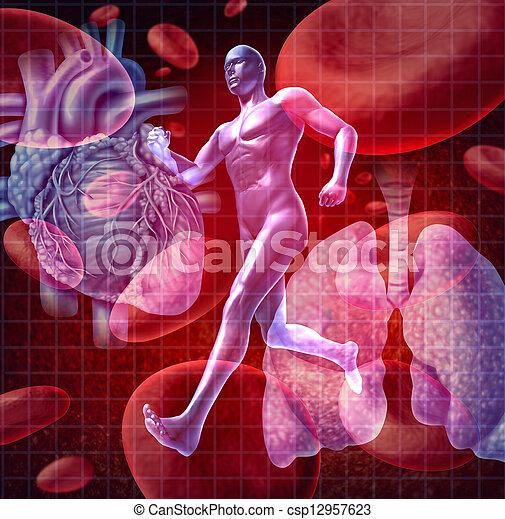 systém, cardiovascular - csp12957623