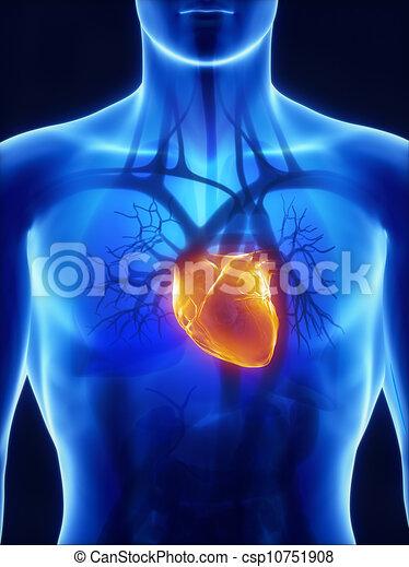 system, röntgenaufnahme, kardiovaskulär - csp10751908