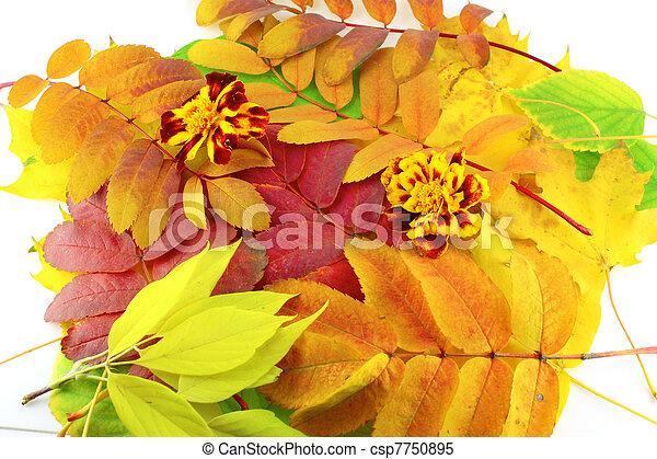 szín, ősz, elvont, zöld, háttér - csp7750895