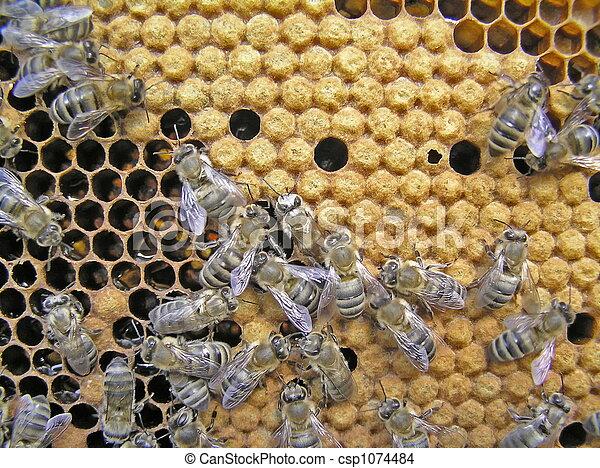 méhkas féreg ketchup toxinok