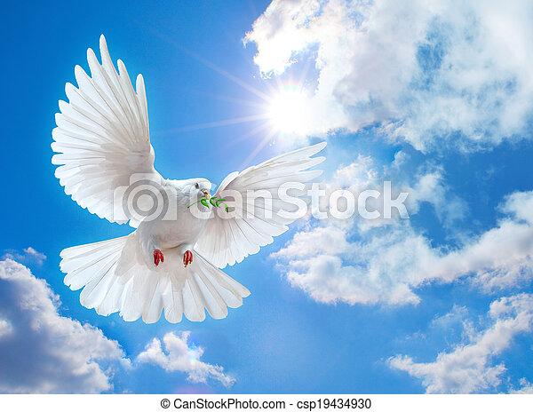 szeroki, powietrze, otwarty, skrzydełka, gołębica - csp19434930