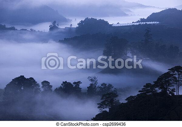 tè, nebbia, mattina, farm. - csp2699436