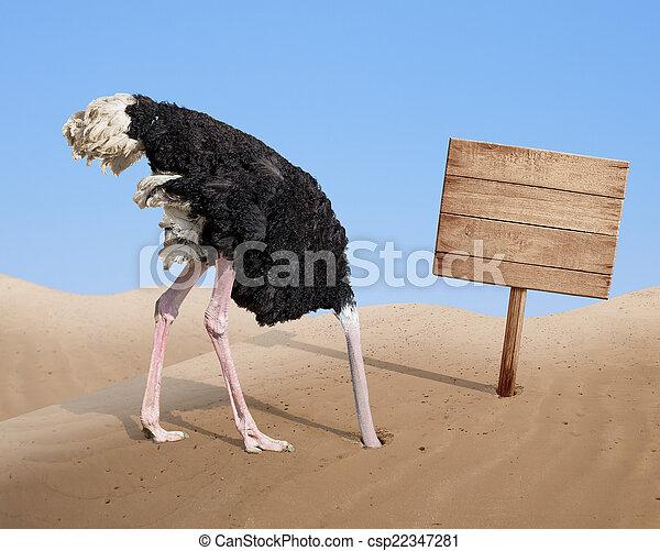 tête, enterrer, bois, effrayé, enseigne, autruche, sable, vide - csp22347281